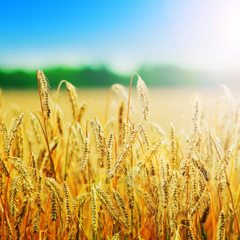 [Znamkak.com] За някои счетоводни и данъчни въпроси,  породени от оценката на земеделската продукция